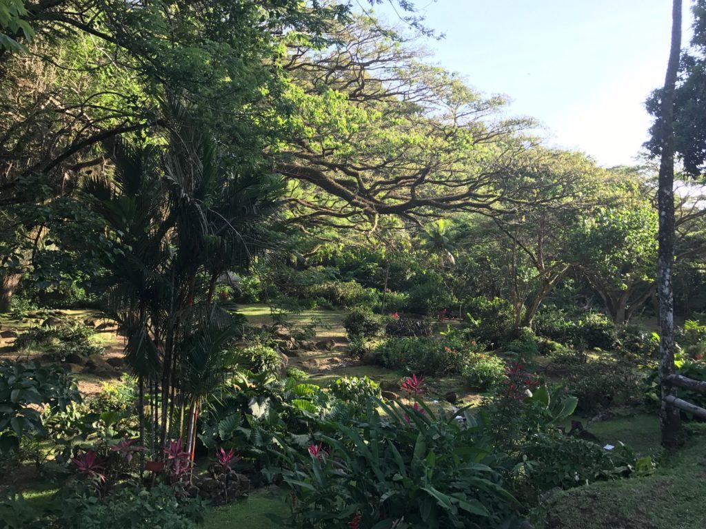 jardin HC